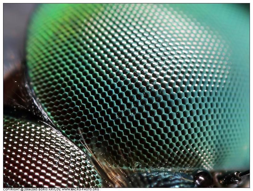 Органы чувств насекомых