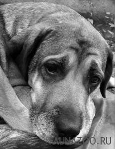 Как ухаживать за старой собакой?