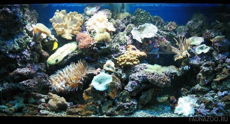 Твердые кораллы