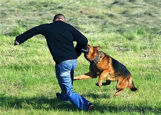 Стоит ли купить ультразвуковой отпугиватель собак