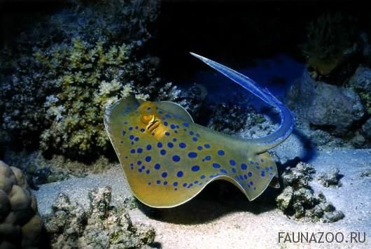 планктон фото на азовском море