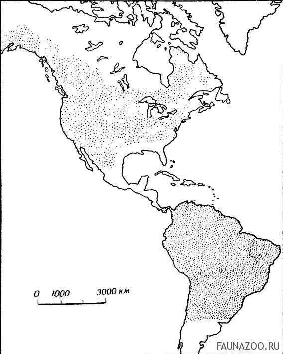 Летние и зимние области распространения деревенской ласточки на американском континенте