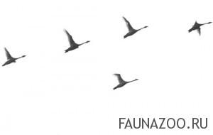 Навигация птиц