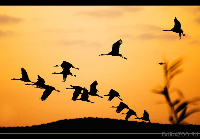Ночные перелеты птиц
