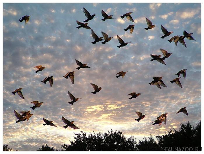 Масштабы перелетов птиц