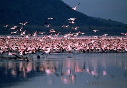 Сезонность и энергетика перелетов птиц