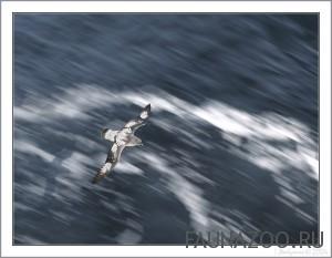 Скорость перелетов птиц