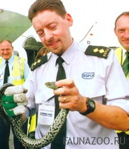 Змея-безбилетник отправляется в полет!