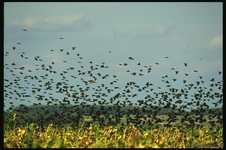 Как птица узнает, что пора лететь?