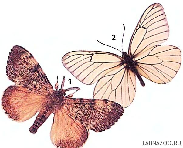 Чувствует ли бабочка боль?