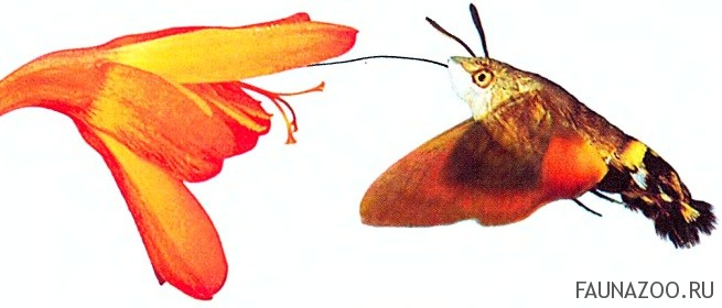 Как насытиться нектаром?