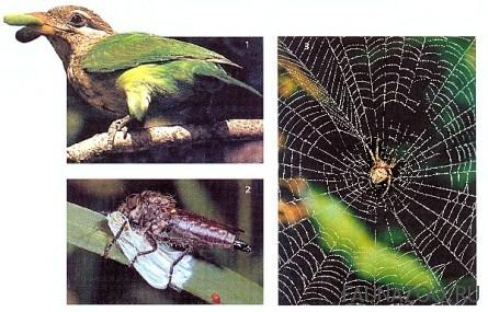 Кого боятся бабочки?