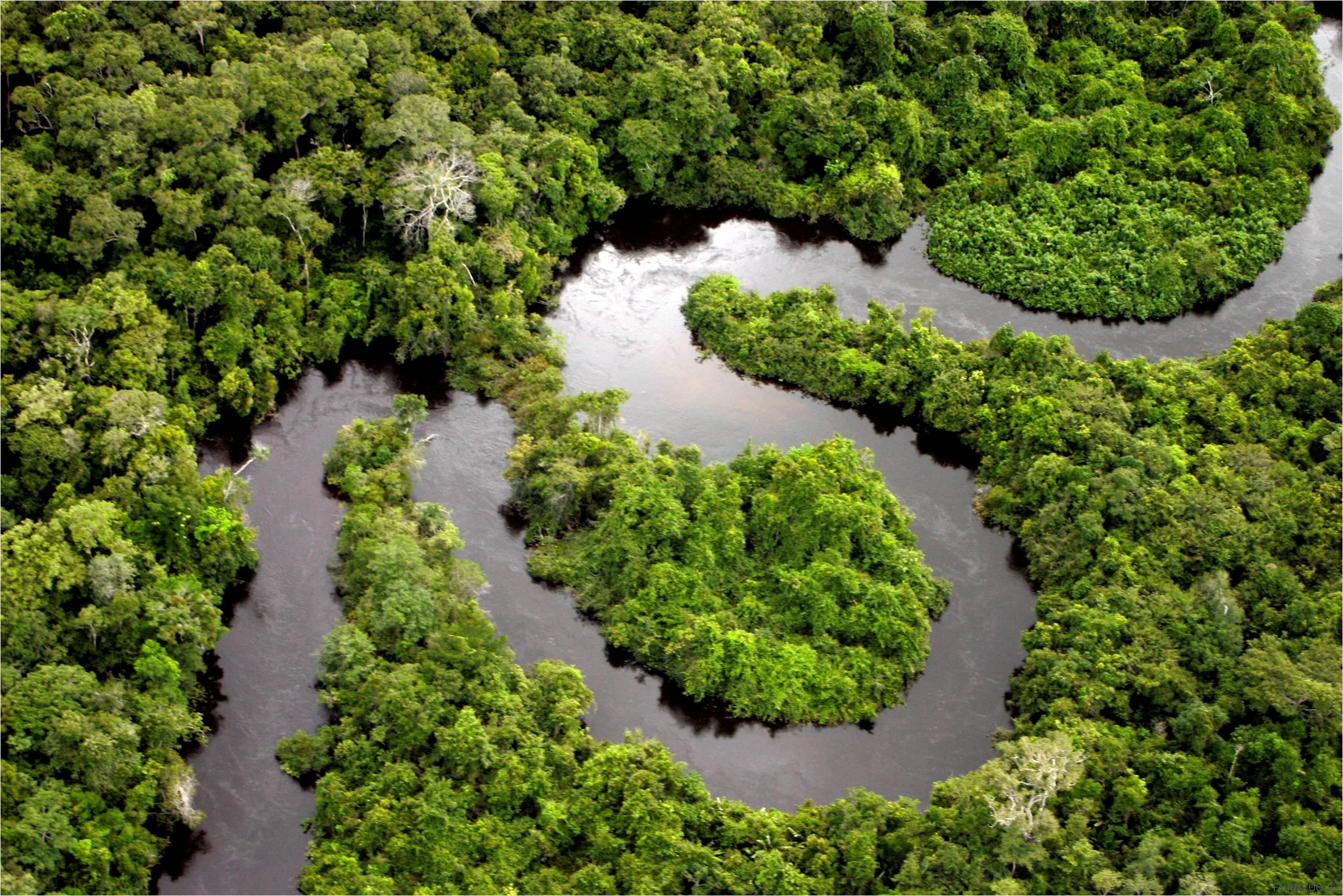 Животные Амазонии