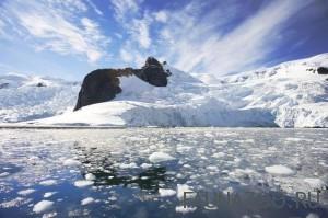 Животные Антарктиды
