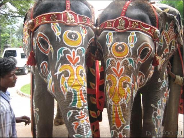 Животные Индии