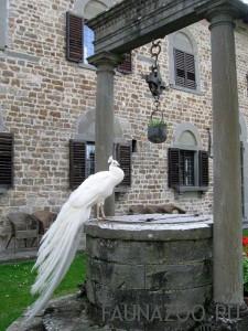 Животные Италии