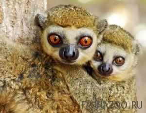 Животные Мадагаскара
