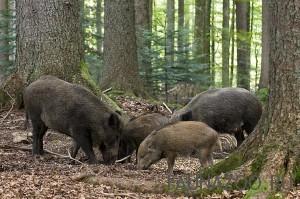 Животные Ростовской области