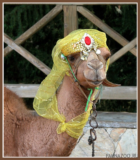 Животные Турции
