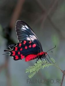 Из чего состоит тело бабочки?