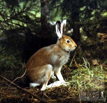 Животные Донецкой области