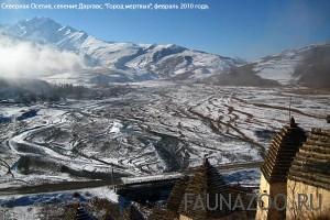 Животные Северной Осетии