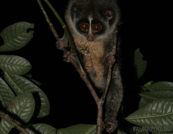Животные Шри-Ланки