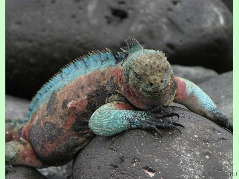 Животные Эквадора