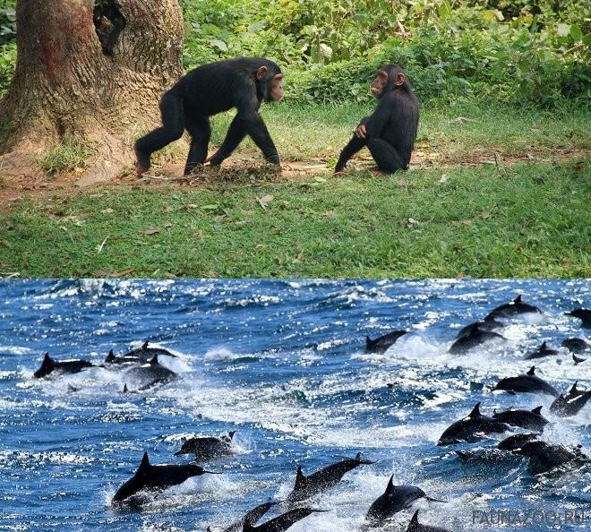 Животные Экваториальной Гвинеи