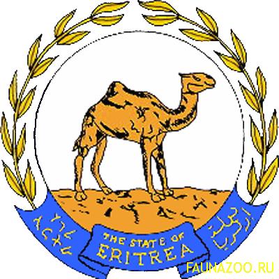 Животные Эритреи