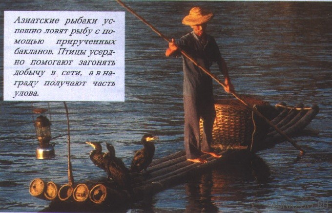 Азиатские рыбаки