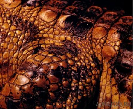 Чешуя крокодила