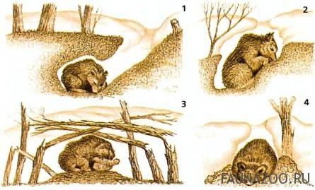 Берлога медведя