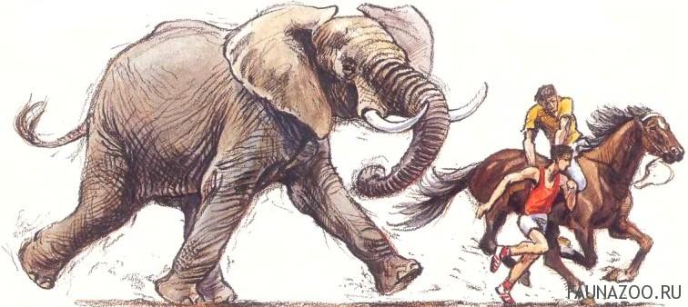 Бегущий слон