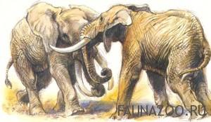 Бьющиеся слоны