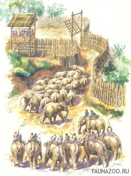 Ловля слонов