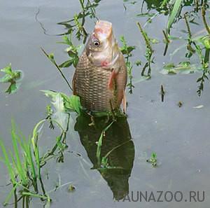 Отпугиватель комаров для рыбалки на карася