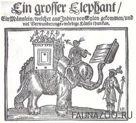 Появление слона в Европе