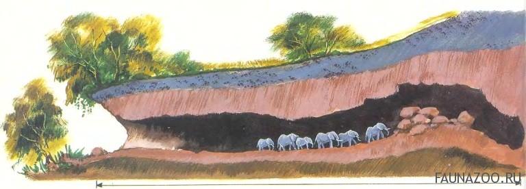 Разумный слон