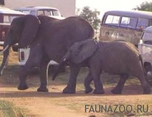 Слоны в туристическом лагере