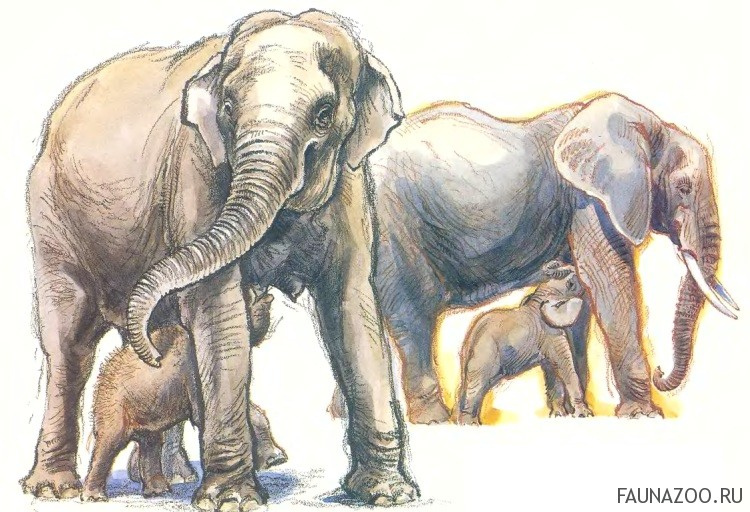 Слонята