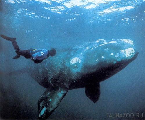История про кита