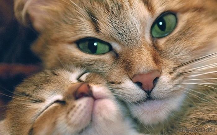 Кошачья аптечка
