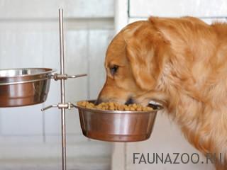 Правильное кормление, уход, отпугиватель собак