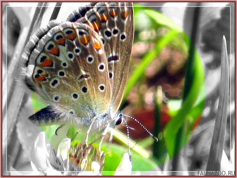 Миграция сильных монархов