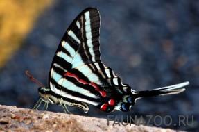 пестрые крылья у бабочки
