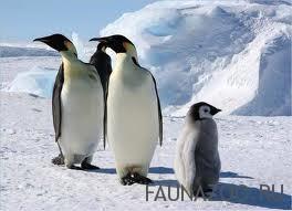 Забавные пингвины на видео