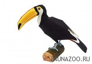 Птица Тукан токо