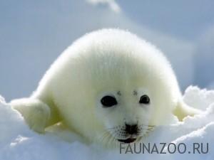 Животные арктической зоны