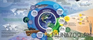 Экосистемы мира
